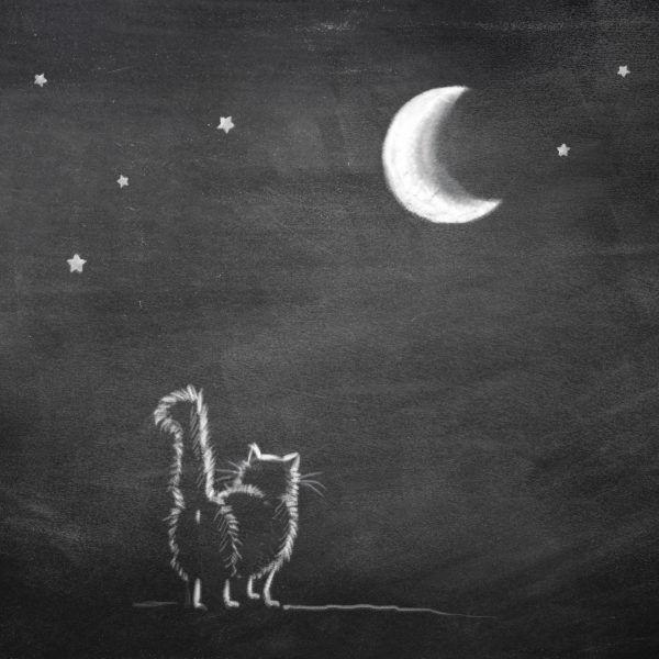 Artprint Kat