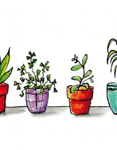 Plantjes op een rij
